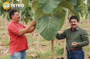 Plantacion de más de 5 ectareas de Teca en el valle de Comayagua Honduras